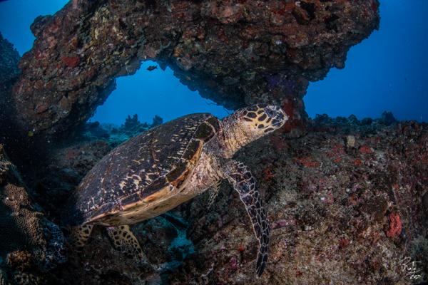 Bazaruto Turtles