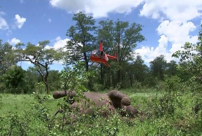Elephants and villagers battle each other for survival in Malawi