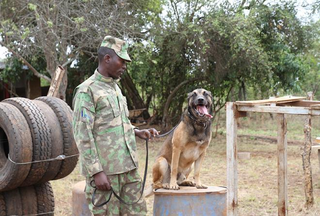Anti-Poaching dog unit at Akagera National Park