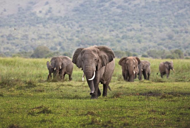 Only 400,000 elephants remain across Africa
