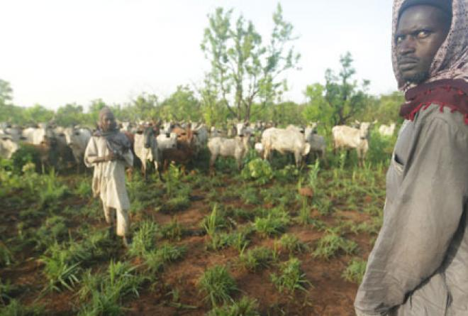 Sudanese cattle herders are one of the main threats.