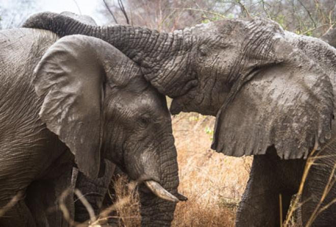 The park's elephant population is on the rise.
