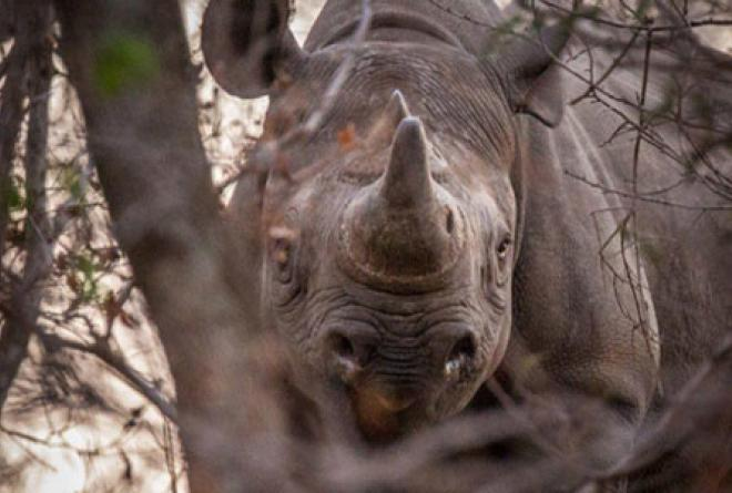 The park is now home to critically endangered black rhino.