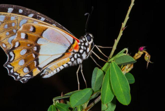 The park has at least 26 endemic butterfly species.