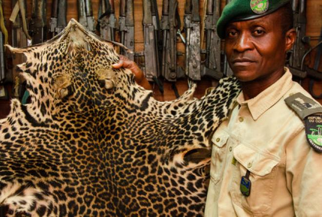 Law enforcement is essential in combating wildlife poaching.