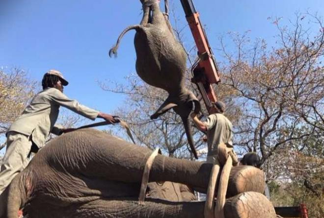 iTV on the ground at the elephant translocation in Malawi