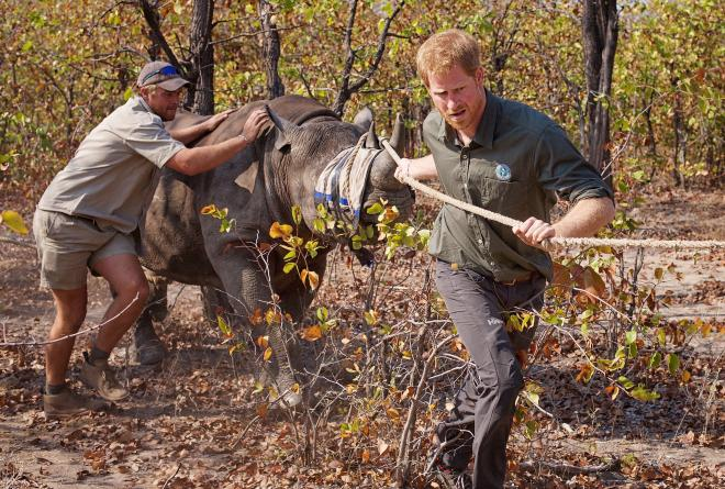 Prince Harry with Rhino
