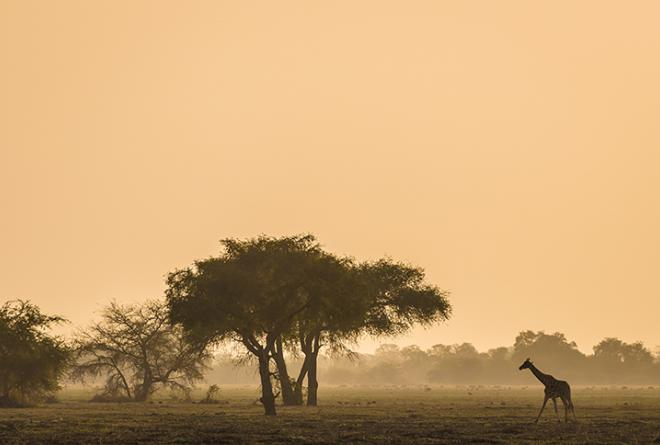 the governments of south africa republic of chad african parks and