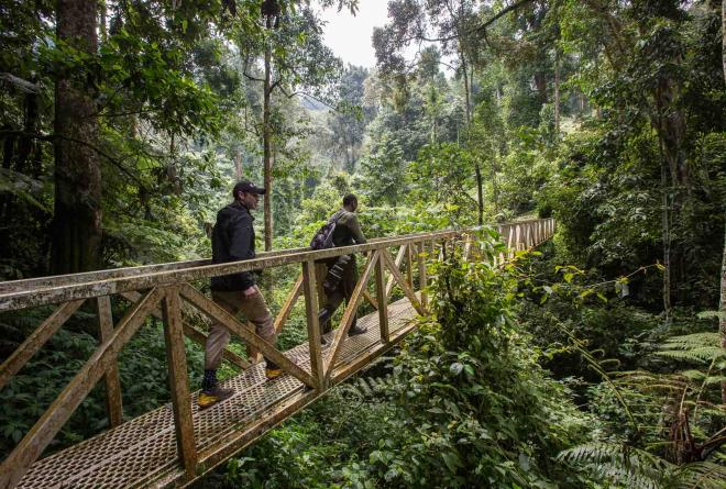 Nyungwe Forest Tourism