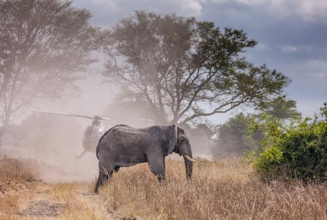 Frank Weiter Elephant Translocation